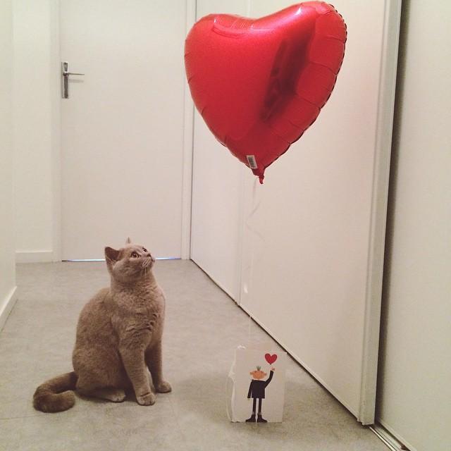 La belle idée pour la saint Valentin qui apparemment fait…