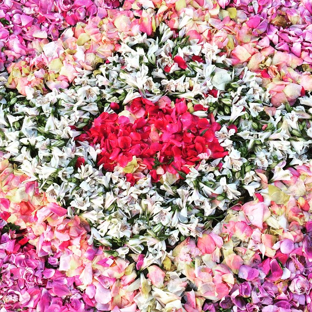 De jolies fleurs sur le sol de Paços de Ferreira