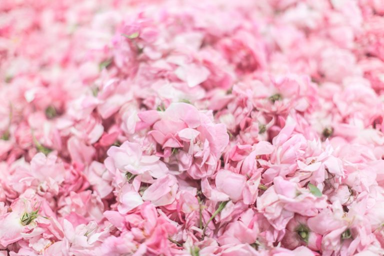1100-chanel-grasse-copyright-Pauline-paulinefashionblog.com-34